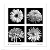 Flora Photographica No. 1 Art Print
