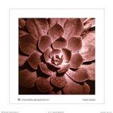 Chocolate Sempervivum Art Print