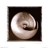 Shell-Egance I Art Print