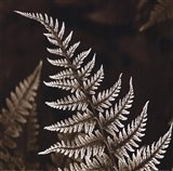 Heathers Feathers Art Print
