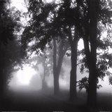 Misty Pathway Art Print