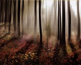 Forest in Pink Art Print