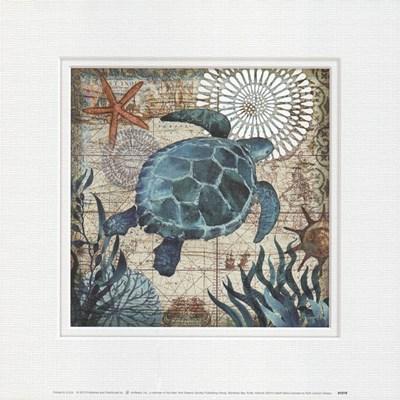 Monterey Bay Turtle Art Print by Allen