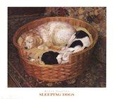 Sleeping Dogs Art Print