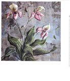 Orchid Study In Pink Art Print