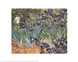 Iris Garden Art Print