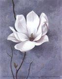 Delicate Beauty I Art Print
