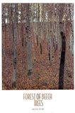 Forest of Beech Trees Art Print