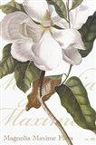 Magnolia Maxime Art Print