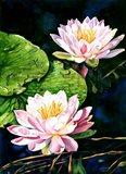 Waterlily Reflections Art Print