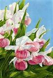 Pink Lady Slipper Flowers Art Print