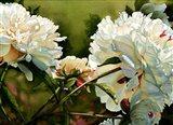 Winter White Peony Art Print