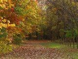 Fall Scene Art Print