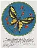 Paradisea Art Print