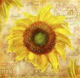 Tuscan Flower 7 Art Print