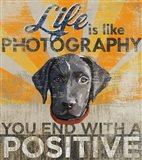 Dog days - Lab Pup Art Print