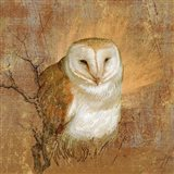 Owl in the wood Art Print