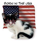 Born In USA Art Print