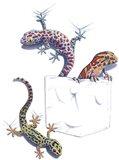 Three Lizards Art Print