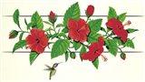 Hibiscus Hummer Art Print