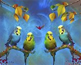Color Birds Art Print