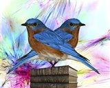 Twin Blue Bird Art Print
