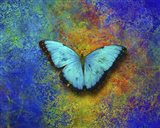 Color and butterfly 1 Art Print