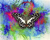Color and Butterfly 2 Art Print