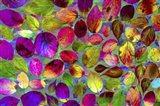Color Explosion 17 Art Print