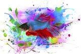 Fish and colors Art Print