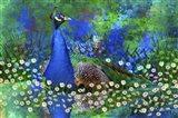 Peacock 2 Art Print