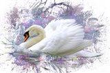 Swan 2A Art Print