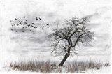Dead Winter Tree 2 Art Print