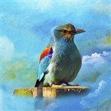 Blue Bird 2A Art Print