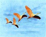Blue Bird 2A2 Art Print