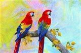 Parrots 87A Art Print