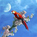 Red Parrot Art Print