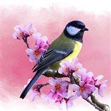 Spring Bird 3A Art Print