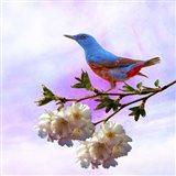 Spring Bird 3B Art Print
