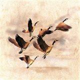 Birds Fly Away 1 Art Print