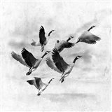 Birds Fly Away 2 Art Print