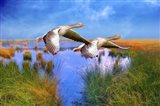Birds In Nature Art Print