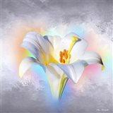 Flower On Colors 1 Art Print