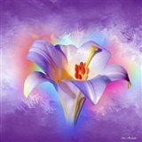 Flower On Colors 2 Art Print