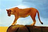 Lioness On A Rock 1 Art Print