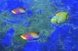 Fish Art 2 Art Print