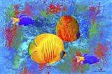 Fish Art 4 Art Print