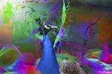 Color Explosion CM7 Art Print