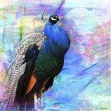 Bird Collection 25 Art Print