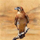 Bird Collection 27 Art Print